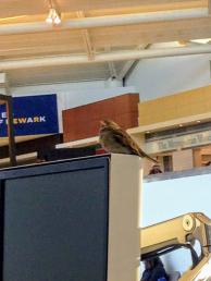 A layover buddy in the Newark International.